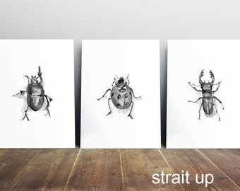Beetle Art bug watercolor - Stag beetle drawing -  3 prints - lady bug Painting - insect illustration - zen art watercolor bug