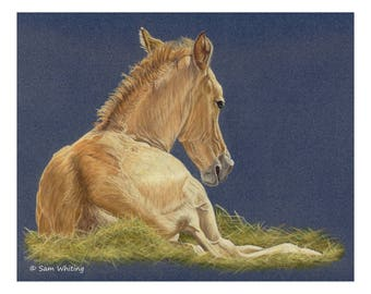 Foal - Limited Edition Giclee Print, 8 x 10 inches