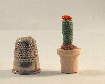 Micro cactus Echinocereus  poppenhuis bloeiend