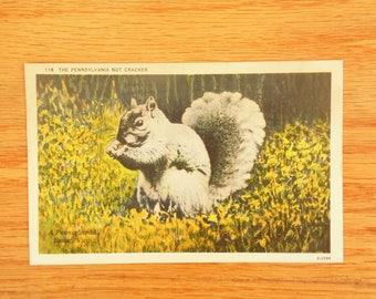Pennnsylvania Postcard - Squirrel 118