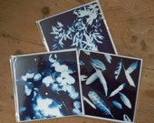 Set of 6 Greetings Cards, Art Print card, Botanical Print, Blue and white card, Greeting card, Birthday card, Art Card, Thank You Card, Note