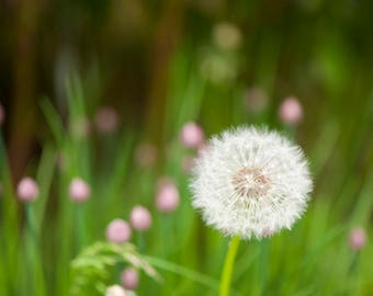 Once Upon a Dandelion
