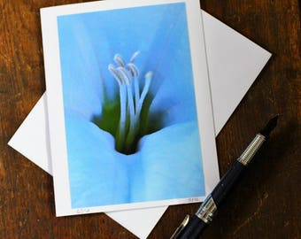 Blank Card Macro White Lily Greeting Card