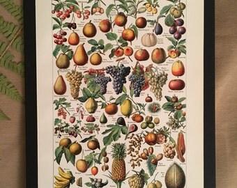 Board naturalist, history & natural sciences - fruit - Larousse
