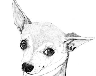 "Pet Portrait, Custom Pet Portrait, sketch, drawing, gift, art - your pet 8""x10"" print plus a digital JPG & PDF file - Example here"