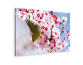 Bird in the Blossoming Cherry - Framed Wall Art Canvas Print // 6 Sizes - medium to large // High Quality // Fast & Free shipping to EU