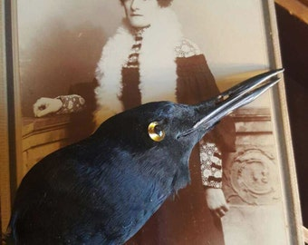 Antique Millinery Hat Bird Pad taxidermy