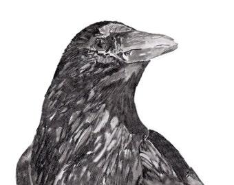 Crow Art Print, Crow Print from an Original Pencil Drawing by Kenley Jones