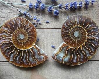 Ammonite Halves Pair | 65x80mm | Home Decor | Collection Piece | Fossil | Madagascar | Earth Healer | Prosperity Success