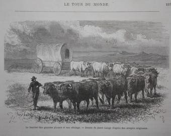 old etch great plains, caravan with cattle, 1868