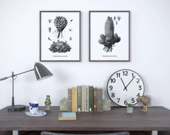 Set of 2 prints, Print set, Botanical print black and white, Black and white prints, Black and white printable, Botanical print set, JPG