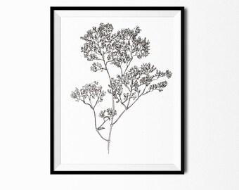 Baby's Breath Print, Flower Art, Botanical Illustration, Wall Art, Babys Breath Art, Flower Drawing, Botanical Flower Print, Flora Print