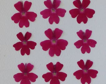 24 Perfect Pressed Flowers - Small Pink Verbena - Real Flowers