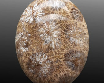 Fossil coral 64.35cts Oval Shape Brown 37.60 x 29.60mm H6.5-7 Indonesia M0116 Cabochon Loose Gemstone Jewelry Making Semi Precious