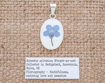 Forget-me-not Flower Pendant. Sterling Silver 925 Botanical Necklace with Real Forget-me-not Flower Specimens.