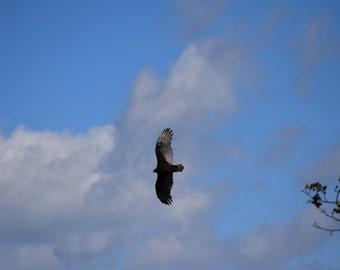 12x12 (8x8 image) Matted Print - Bird, Shenandoah National Park