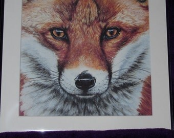 fine art print of my original fox portrait 10x10