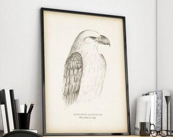 Antique bird prints, Bird wall art, Vintage animal print, Instant download animal print, Home wall decor, Printable print, 8x10, 11x14, JPG