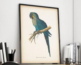 Vintage bird print, Parrot print, 8x10 bird print, 11x14 bird print, Bird art, Bird illustration, Instant download art, Printable art, JPG