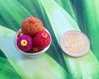 Mini garden Rosita capsule alu