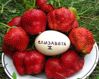 Strawberry Elizabeth ll. Divine honey taste .2 harvest season. 50+ seeds.