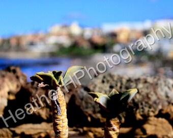 Paphos, Nature Close Up - Photography