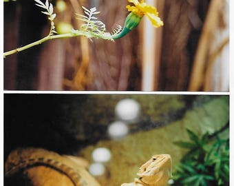 The Lizard and the Marigold // 35mm photograph 6x4 inches (as seen in January's analog blog)
