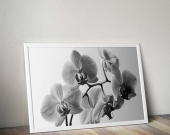 Flower nature photography black and white, art photography, digital download printable black and white flower, instant download