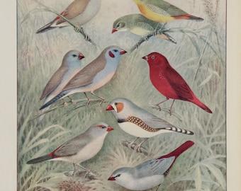 A3 Bird Print Wall Art - Dainty Foreigners (Print #12)