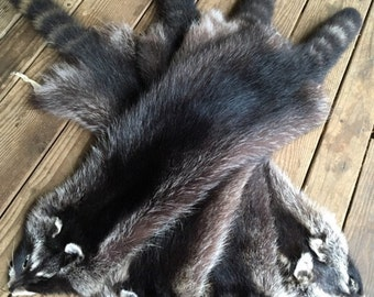raccoon pelts log cabin decor man cave art leather fur choice select flawless xxx dark natural
