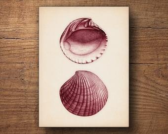 Beach decor, Seashell print on Canvas – Coastal art, Scientific illustration, Vintage art, Coastal prints, Canvas print, Beach art