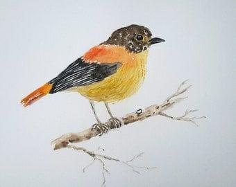 Original watercolour bird painting, black and orange bird, bird painting