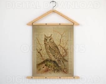 Home wall art, Dictionary bird print, Printable graphics, Bird print, Antique owl art, Vintage owl print, Dictionary, Owl poster, 11x14, JPG