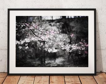 Cherry Blossom Tree, Newark, NJ, Wall Art, Print, Bathroom, Bedroom, Kitchen, Selective Color, B&W