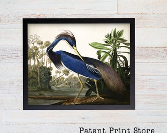 Vintage John James Audubon Louisiana Heron Print. Bird Prints. Audubon Prints. Dining Room Art. Living Room Art. Kitchen Art Decor. Birds 31