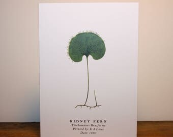 Kidney Fern: Greeting Card