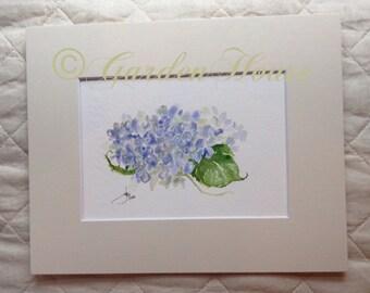 Original watercolor of single blue hydrangea blossom