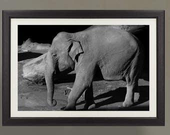 elefante, foto, stampa, jpg