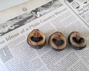 Hickory Heart Nut Collection, Natural Organic Craft Material, Organic Jewelry Supply