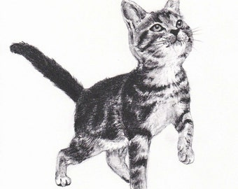 A kitten painting /Pencil drawing/ 子猫のイラスト・鉛筆画