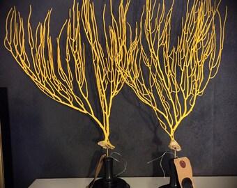 Yellow Gorgon (natural)