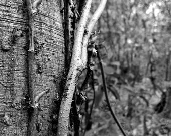 "Black and white original nature photograph printable art 24x36 300 dpi ""ARBRE"""