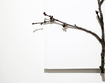 natural wild tree branch design canvas piece
