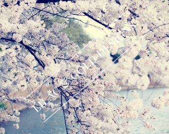 Digital Print - Cherry Blossoms