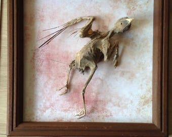 Mummified bird