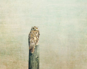"owl photograph, nature photography, large art, large wall art, wall art prints, fine art prints, large art prints, rustic - ""Owl See You"""