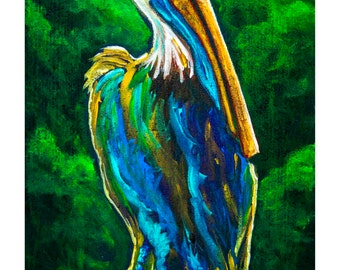 Southern Pelican