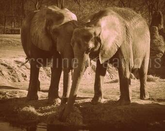 Elephant Photography, Elephant Print, Zoo Photography, Animal Photography, 8x10, 5x7, Altered Photography