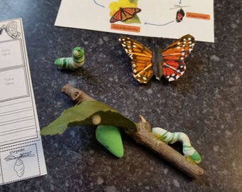 Worksheets On Static Electricity Butterfly Life Cycle  Etsy Math Worksheet For Grade 6 Pdf with Properties Of Exponents Worksheet Answers Excel  Inch Doll Butterfly Set Life Cycle Sheet Worksheet Caterpillars Monarch  Butterflies Free Tenses Worksheets Word