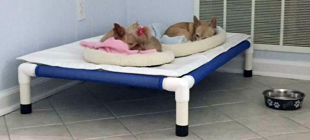 zoom - Raised Dog Beds
